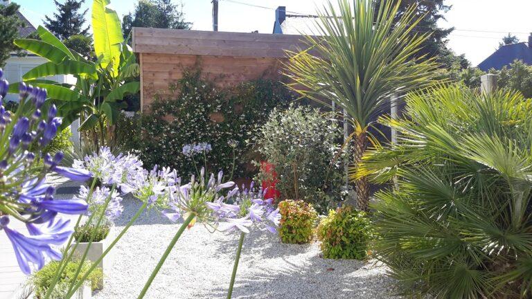 plantation diverse palmier agapanthe